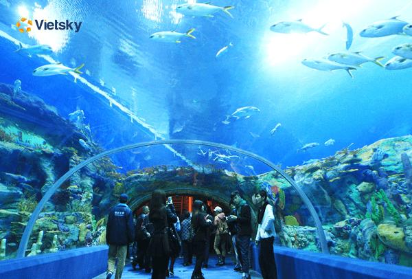 Tour du lịch nha Trang - Viện hải dương học