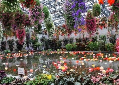 Vườn hoa khổng lồ trong nhà