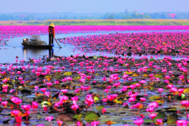 Red Lotus Sea du lịch thai lan