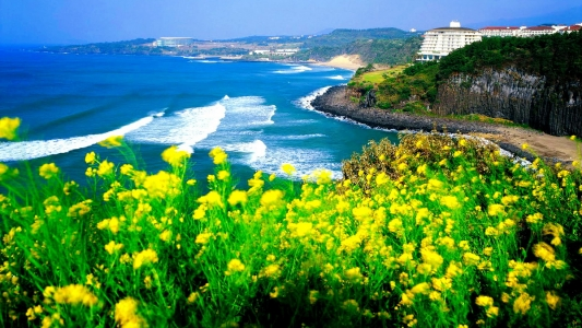 Tour Jeju không cần visa