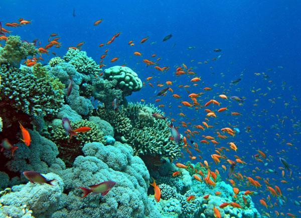 4. Du lịch sinh thái ở Thái Lan