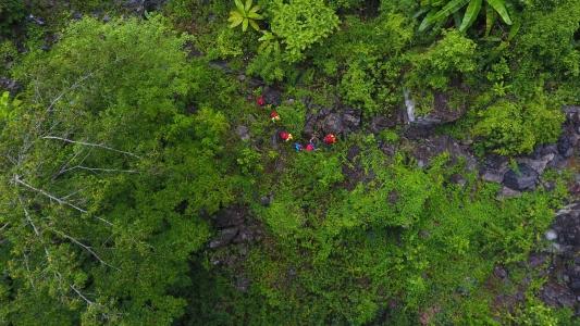 Thảm thực vật ở Sơn Đòong Quảng Bình